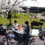 雪と桜のコラボレーション