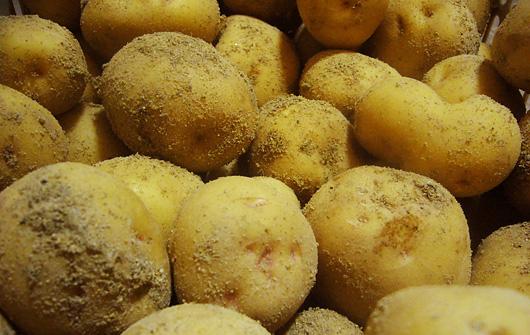 potato02